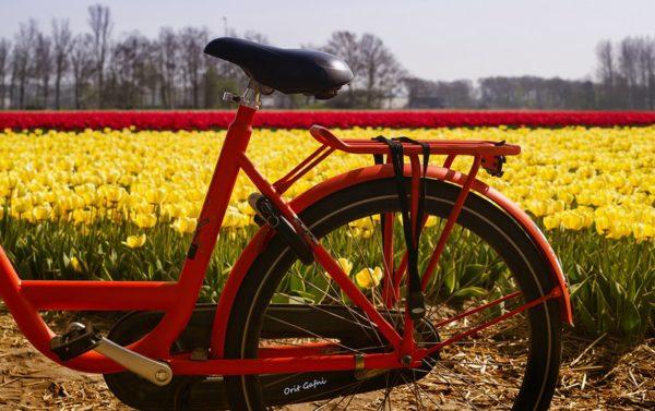 אורית גפני | הולנד Orit Gafni | Holland